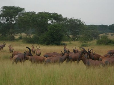 Game Viewing in Murchison Falls Park