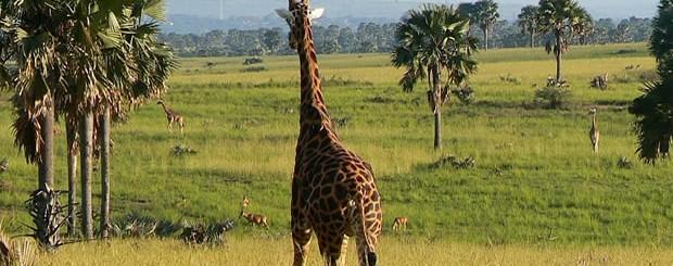 Murchison Falls Park Tour