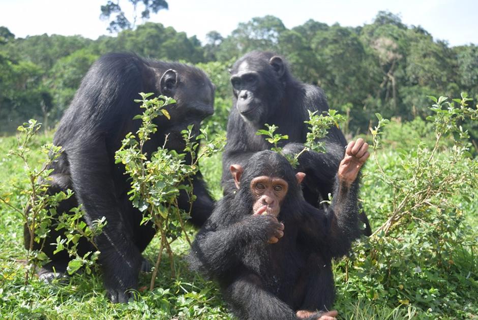 3 Days Kibale Chimpanzee Safari