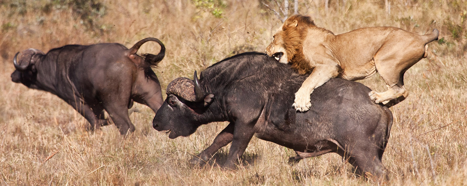 5 Days Kidepo Wildlife Safari