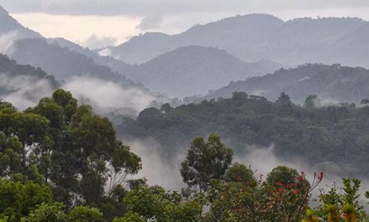 Bwindi Forests