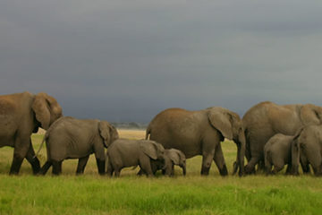 Game Viewing Safari Uganda
