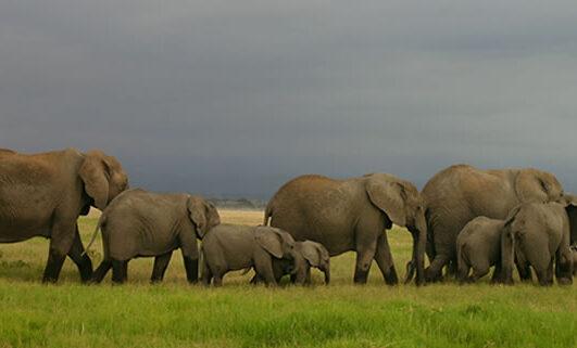 Game Viewing Safari Uganda