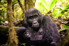 Bwindi Gorilla Trek