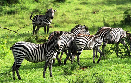 Lake Mburo Wildlife